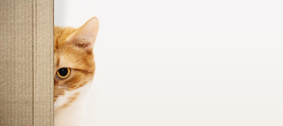 kočka za krabicí
